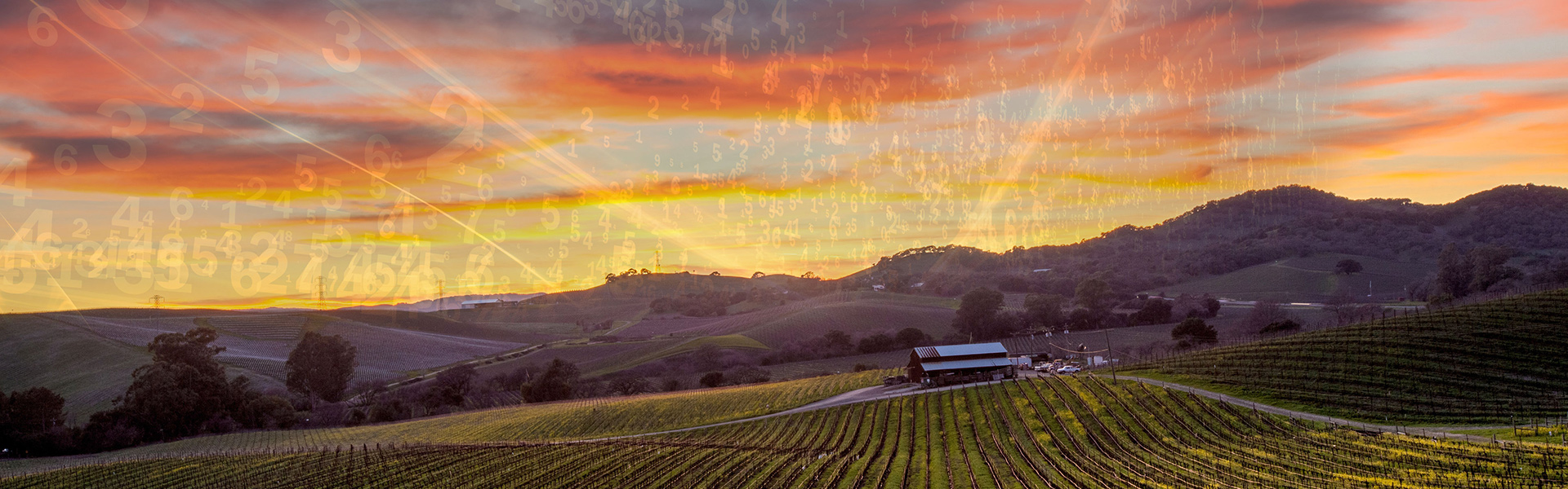 Winery Accounting Services In Napa Valley